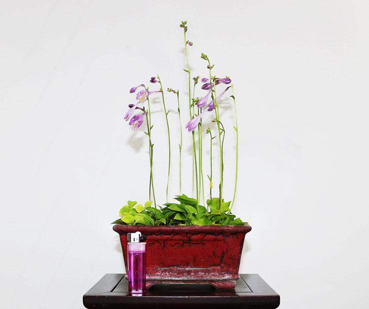 좀비비추-꽃-3.jpg