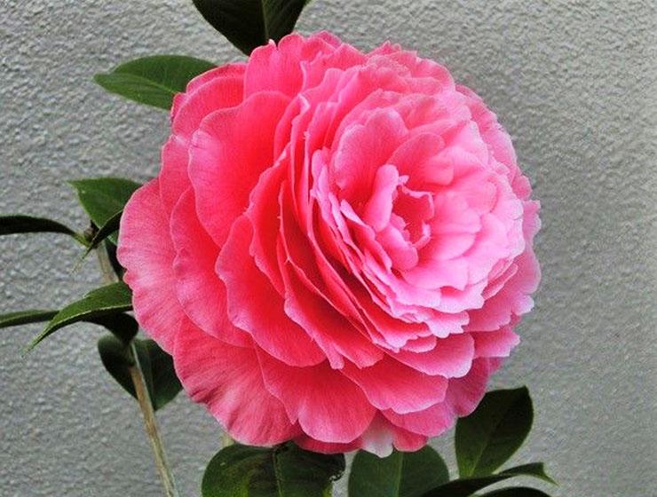 발렌타인데이바-동백-1.jpg